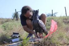 Installing the decoys (photo: K. Kirov / RHM Ruse)
