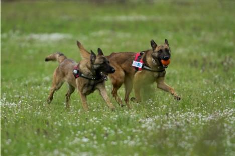 Kiko and Kuki in action (T. Bounas, HOS)